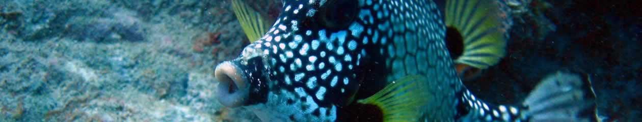 Reef Monitor